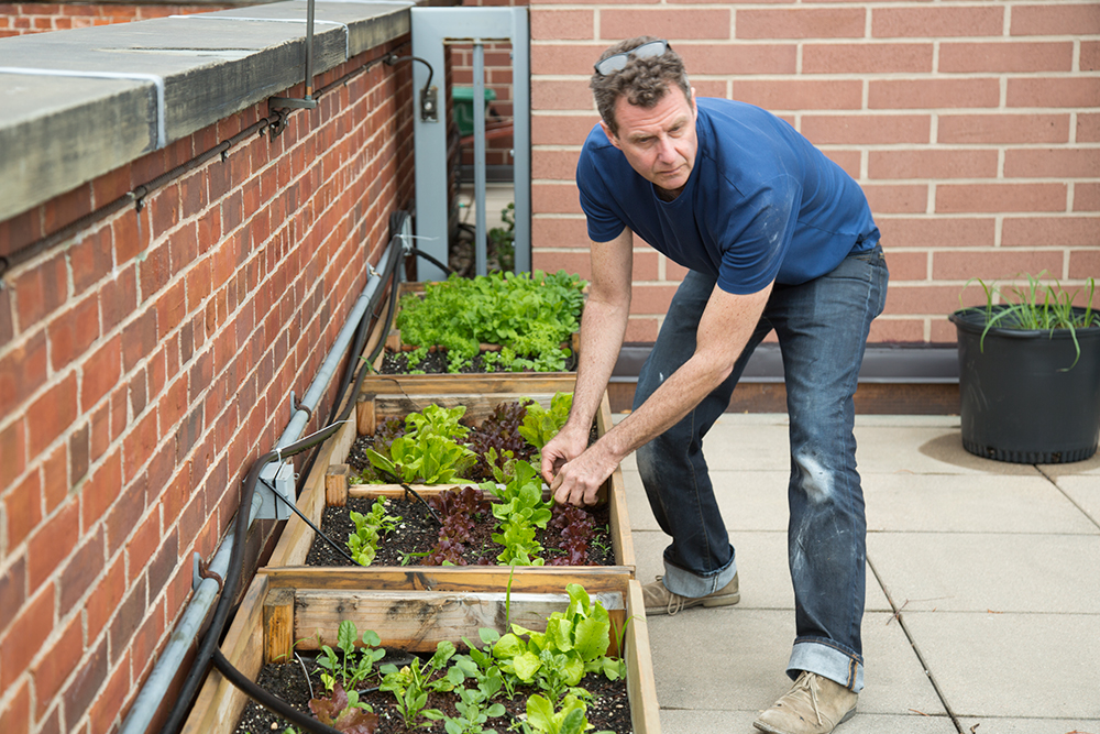 Jon Kessler's Garlicky Green Salad