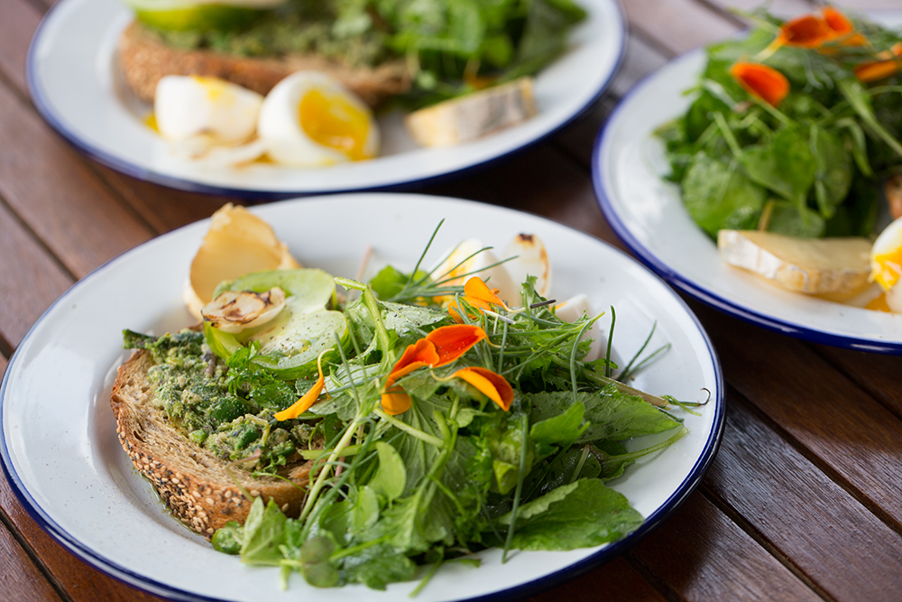 Sarah Keough's Mixed Greens and Epazote Pesto Salad