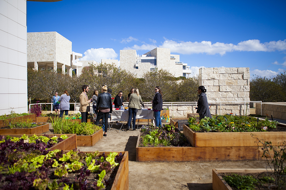 The Salad For President Getty Salad Garden